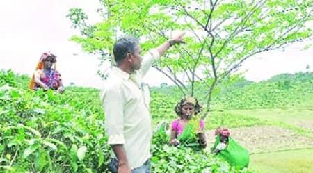 Tea estates, West Bengal tea estates, control over tea estates, Duncan industries, Dhumchipara tea garden, indian express news