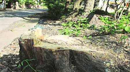 Maharashtra may abolish tree felling permit for industries