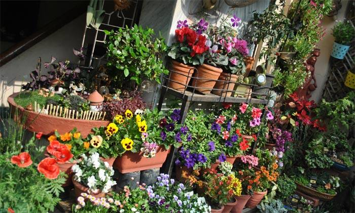 PHOTOS Six ways to make your rooftops and balcony gardens green and