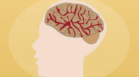Emotional brains physically different from rational ones, revealsstudy