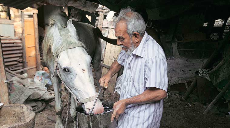 It takes Rs 18,000-20,000 to feed a horse per month.