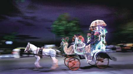Mumbai's victoria, Victoria carriage, victoria joyride, victoria horse ride, PETA, Bombay high court, Mumbai news, indian express news, latest news