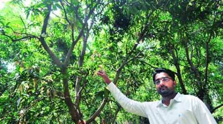 To prevent theft of mangoes, Valsad fruit growers install CCTVcameras
