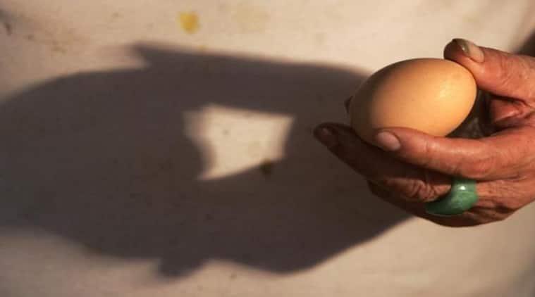 Brazil egg, Brazil egg news, chicken unusual egg, brazil chicken, brazil news, Princess of Wales Diana, Charolette chicken, trending news, world news, international news