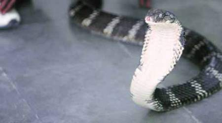 'Cobra Venom': Six accused in Forest custody, officials say they are only couriers