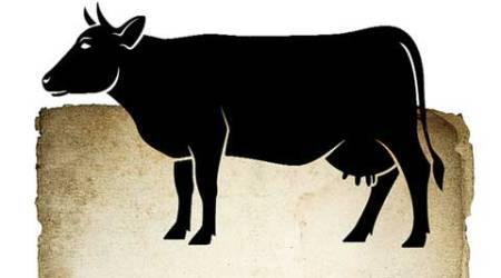 Opinion: Elusive holiness of the cow