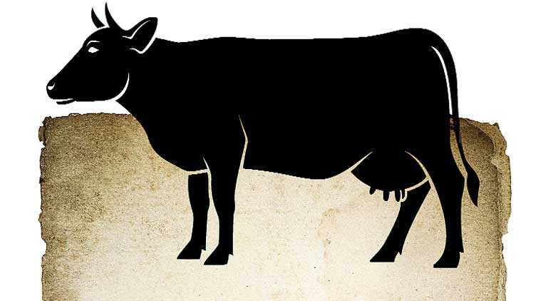 beef ban, beef ban rajasthan, rajasthan beef, rajasthan beef ban, rajasthan cow protection, cow protection act, cow protection act rajasthan, rajasthan news