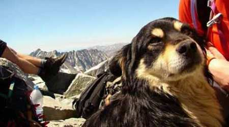 Abandoned dog finds new friends, new life after being rescued from Poland's Tatra mountains
