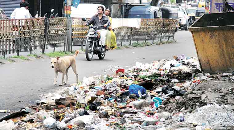 Piling garbage in nooks and corners of the city had its fall-out in the form of a sharp increase in dog bites in the last few months compared to the previous year.