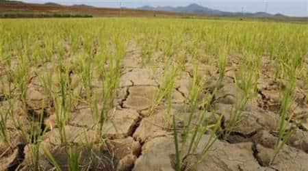 drought, mumbai drought, marathwada, famrers, mumbai farmers, mumbai news, city news, local news, maharshtra news, Indian Express