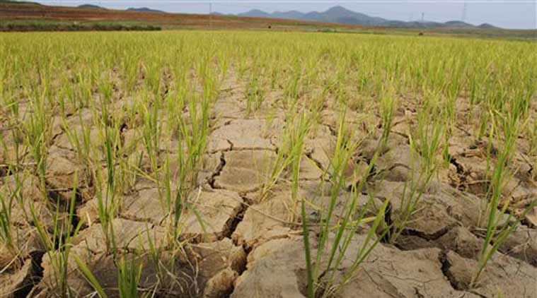 drought, mumbai drought, marathwada, famrers, mumbai farmers, mumbai news, city news, local news, maharshtra news, Indian Express