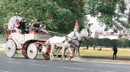 After Bombay HC ban on Victorias, Kolkata phaeton owners fear similar fate