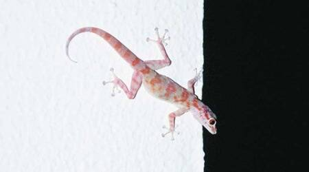 Anganwadi centre in Mauli Complex: Mayor finds dead lizard in middaymeal