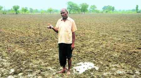 Indian monsoon, Monsoon, india monsoon, Kharif, Kharif crop, Kharif production, Monsoon, Andhra Pradesh farmers, Indian farmer, crop loss, Andhra Pradesh kharif, Andhra Pradesh Kharif plantings, Chandrababu Naidu, IMD, Average rainfall, monsoon india 2015, india weather, Monsoon news, india news, news, Indian express