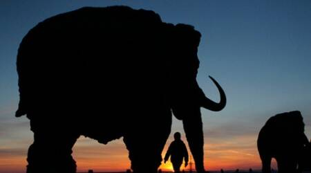 Earth experiencing sixth mass extinction, animals dying off faster:study