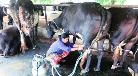 Karnataka govt proposes free milk in schools for five days a week
