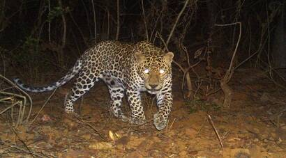 Leopards roam Mumbai's westernsuburbs