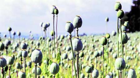 Punjab: Opium seized, BJP member among two arrested