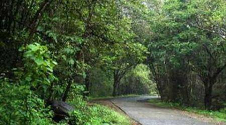 300 resettled forest dwellers occupy Gondia national park, raise newdemands