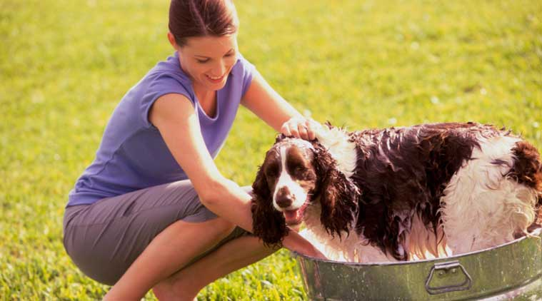 Tips For Keeping Your Home Clean When You Have Pets The