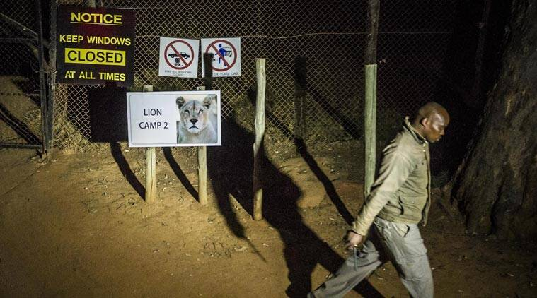 Lion that killed American tourist stays open: South Africa