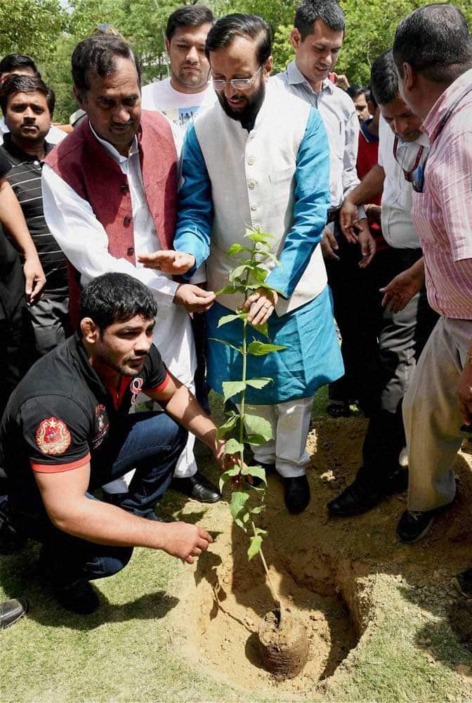 World Environment Day, Environment Day, Environment, Sachin Tendulkar, Virat Kohli, Kohli, Tendulkar, Rohit Sharma, Sushil Kumar, Cricket, Sports Photos, Environment Day photos