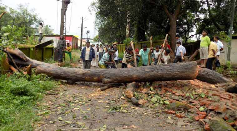 monsoon, mumbai monsoon, tree fall, mumbai tree fall, monsoon tree fall, mumbai news, city news, local news, maharashtra news, Indian Express