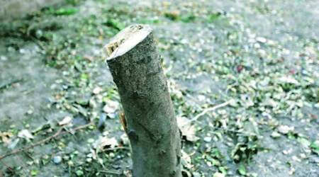 Shiv Sena, cutting trees, builder, maharashtra builder, mumbai news