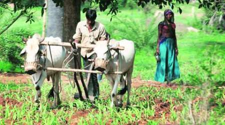 As rains play truant, agriculture ministry talks about contingency plans