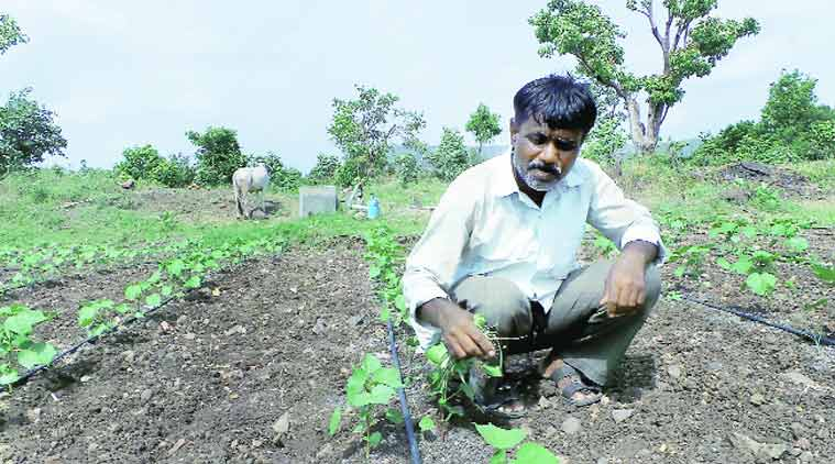 Small cotton farmer Madhukar Sonawane.