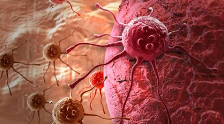 """We have been trying to make drugs that target mutations in cancer cells,"" said study senior author James DeGregori, associate director for basic science at University of Colorado Cancer Center in the US."