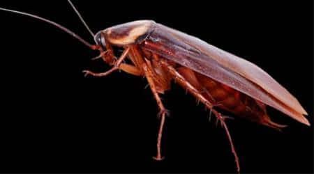 cockroach, cockroach zoo, japan zoo, tokyo zoo, cockroach japan zoo, cockroach tokyo zoo, Shunanshi Tokuyama Zoo, yamaguchi, cockroaches, world news