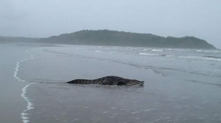 crocodile2759