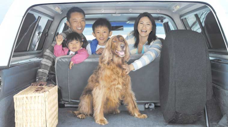 A car ride is the ultimate joy for a dog but for some of them especially puppies, travelling is extremely stressful. (Source: Thinkstock Images)