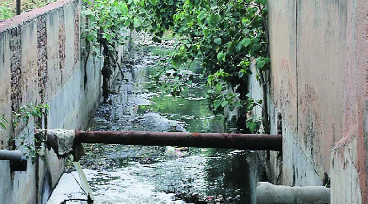 chandigarh drains, chandigarh groundwater, punjab drains, punjab canals, punjab storm drain, chandigarh news, india news