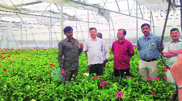 Farmers In Parched Village Switch From Sugarcane To Gerbera Flowers India News The Indian Express
