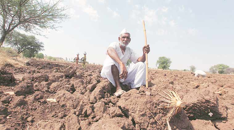 farmers, Narendra Modi, farmers policy, food security, Agricultural policy, Indian farmers, crop prices, farmers suicide, farmers crops price, Ashok Gulati column, indian express column, ie column