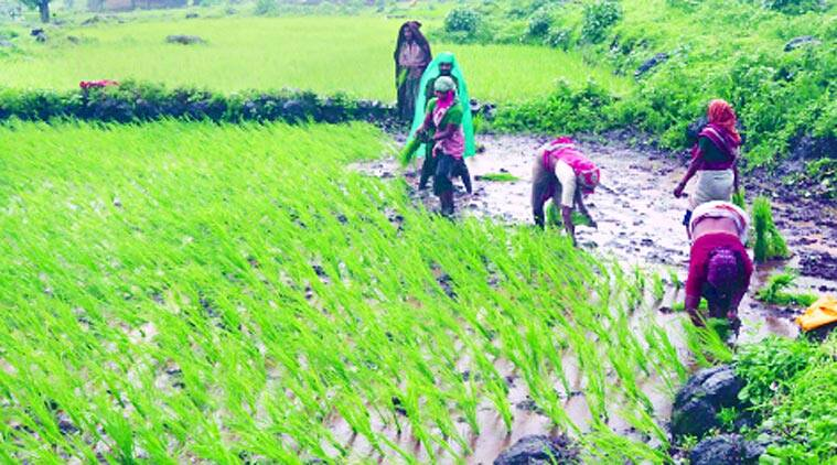 rural infrastructure, agrarian crisis, Madhav Chitale, indian farmer, farmer, rainfall, irrigation projects, mumbai news, maharashtra news, Indian Express