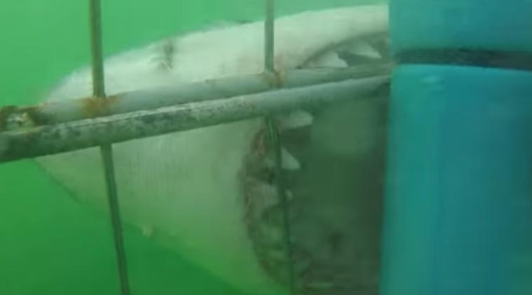 Great white 'Jaws' shark dies after days in Japan aquarium ...