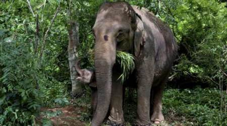To save India's elephant corridors from humans, a £20 million global initiative