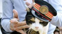 Cat stationmaster Tama mourned in Japan, elevated as goddess