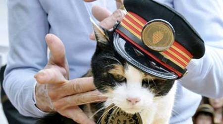 cat stationmaster, japan cat stationmaster, cat stationmaster japan, japan cat stationmaster funeral, japan cat funeral, japan tama funeral, japan cat stationmaster funeral, japan news, asia news, trending news, world news, indian express