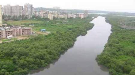 36-sq-km growth in mangrove cover in 2 years: FSI report