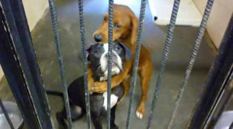 A photo of two dogs hugging saved them from  death