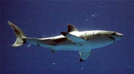 Man killed by shark while diving off Australian coast