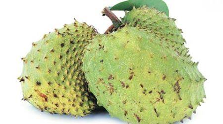 Soursop or prickly custard apple – an adjunct to chemotherapy fromtropics