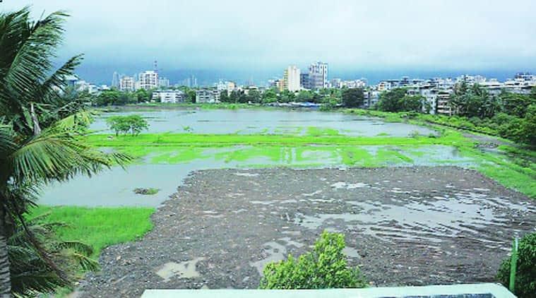 National Green Tribunal, NGT, Coastal Regulation Zone, mumbai govt, maharashtra govt, CRZ, environment, environmental degradation, mumbai news