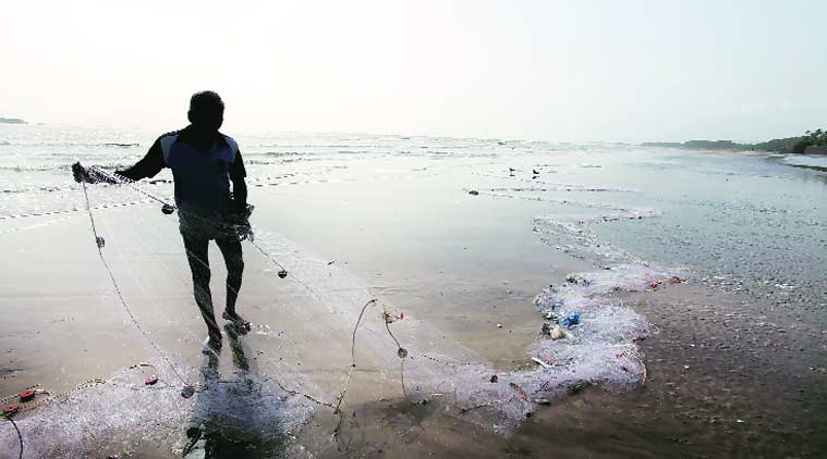 A blue whale that lost its way. Villagers who did everything they could to save their devmasa. The story of a heroic struggle on a beach near Mumbai