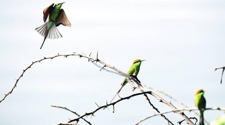 Okhla Bird Sanctuary, National Board of Wildlife, Bird Sanctuary NCR, eco-sensitive zone, NCR construction projects, Bird sanctuary construction projects, Delhi news, NCR news