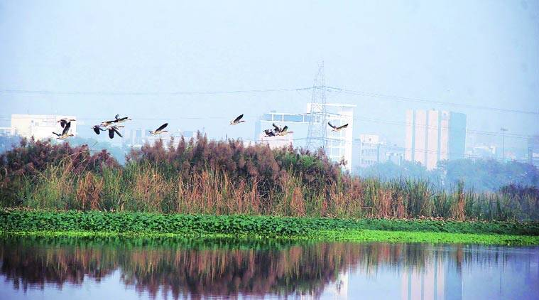 The area around the Okhla Bird Sanctuary has seen a construction boom since the Nineties. (Source: Express photo by Gajendra Yadav)